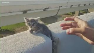 Kitten rescued from concrete barrier on highway near Minute Maid Park