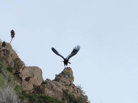 Colca Canyon tour in Peru