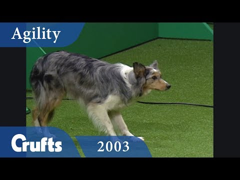 Team Agility Final from Crufts 2003 | Crufts Classics