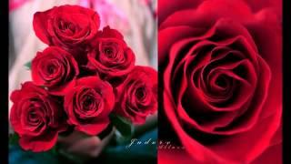 Emi Fujita - The Rose / (The