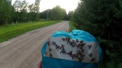 DEERFLY PATCHES : How To Stop Deer Flies. PLACE AN ORDER