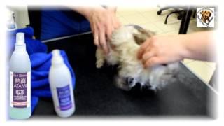 THOR - Как мыть кролика? Вислоухий Ангорский кролик