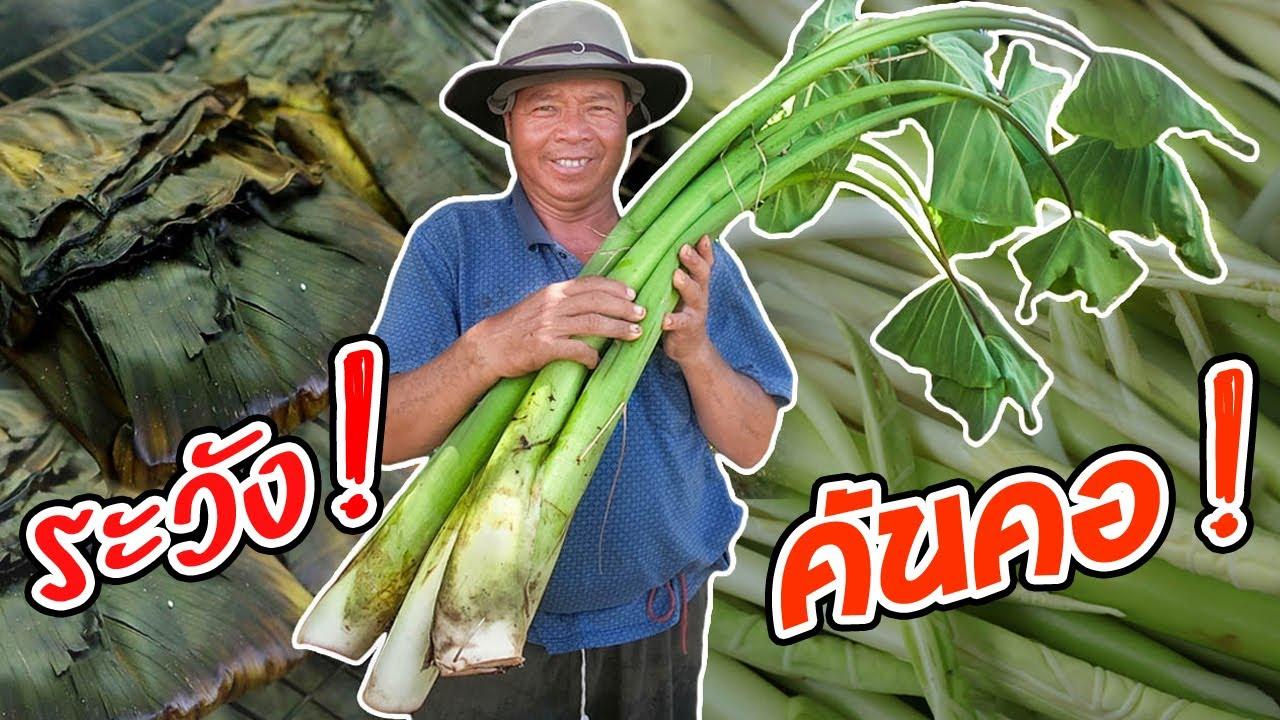 เมนูแปลก! แอ๊บหลี่หวอน สูตรครัวป่าไผ่ วิธีกินบอนป่า!! l SAN CE
