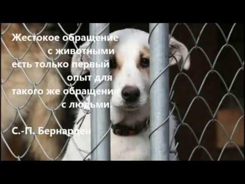 Мобифильм Сказка о собаке - ГУО Средняя школа №15 г. Полоцка