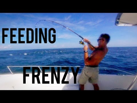 Feeding Frenzy Off Edisto Beach!! (Bonito and Spanish Mackerel)