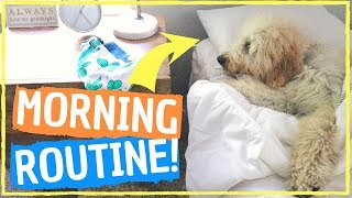 Goldendoodle's Morning Routine / Puppy Dresses Himself!!