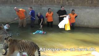 Tiger Temple Thailand -  Wat Pha Luang Ta Bua