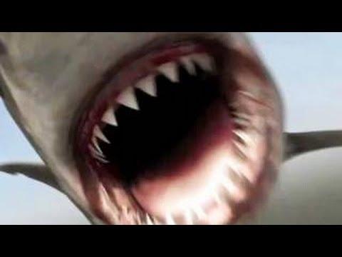 Horrific Shark Attack! (BRUTAL SHARK ATTACK!)