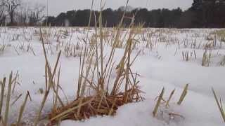 Winter at Fuller Farm Thumbnail