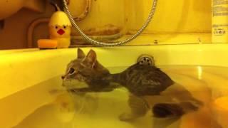 Кот который не боится воды