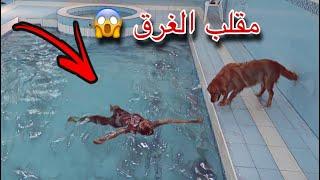ردة فعل الكلبه القولدن ليزا لما شافتني غرقان بالمسبح 💔