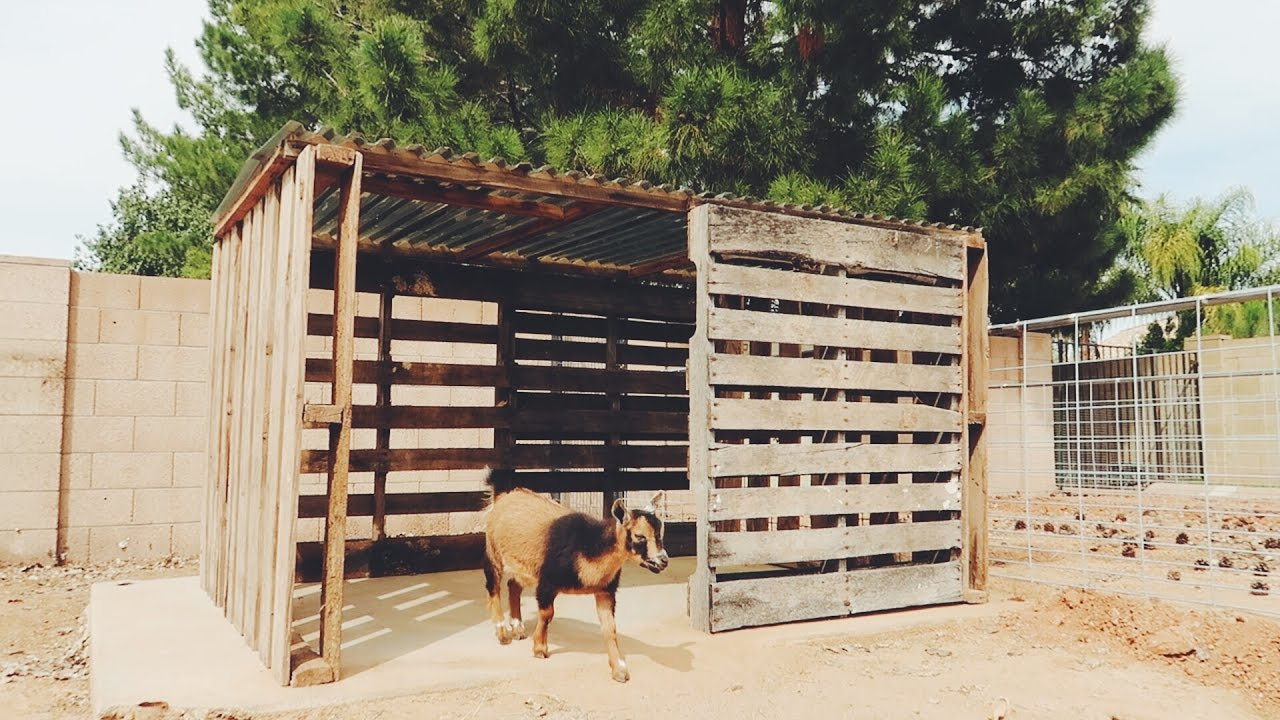 A Goat House made from FREE PALLETS YouTube