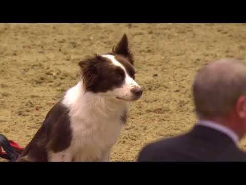 The Kennel Club Large Senior Dog Jumping Grand Prix Olympia 2017