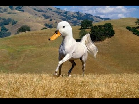 Oh No It S A Horse Sized Duck Youtube