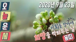 용띠 오늘의 운세 2020년 9월 23일
