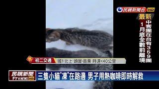 可愛小貓「凍」彈不得 路過男子淋咖啡解救-民視新聞