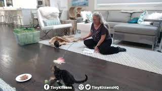 allie-and-bentley-pack-their-tiny-suitcases-tinykittens-com