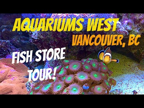 Fish Store Tour Of Aquariums West In Vancouver, BC