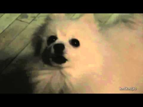gabe shitposting // more text to speech dog source