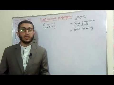 Clostridium Perfringens Lecture in Urdu
