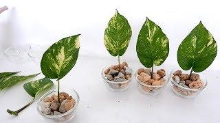 Como fazer mudas de Jiboia facilmente e um painel vertical para colocar plantas