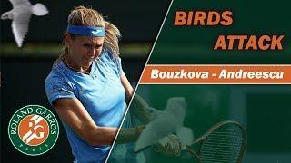 Birds Attack | Roland-Garros 2019 | Bouzkova - Andreescu (first round)