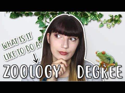 🐙 ZOOLOGY DEGREE: What is it like? 🐢
