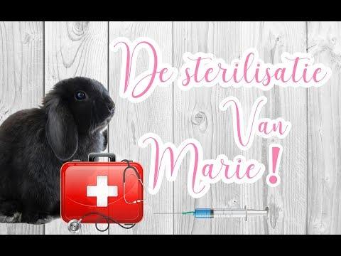 de sterilisatie van mijn voedster/konijntje Marie #VLOG1  BUNNBUNN