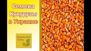Семена Кукурузы Купить в Украине от Агроэксперт Трейд