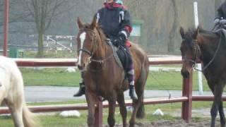 Klaudia i konie z Wawrzkowizny.wmv
