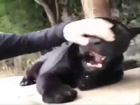 Встреча с животными после разлуки .