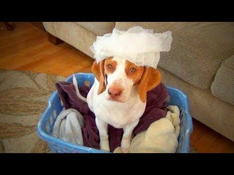 Funny Animals 🐱🐶 Cute Cats and Dogs Doing Crazy Things (Full) [Epic Life]