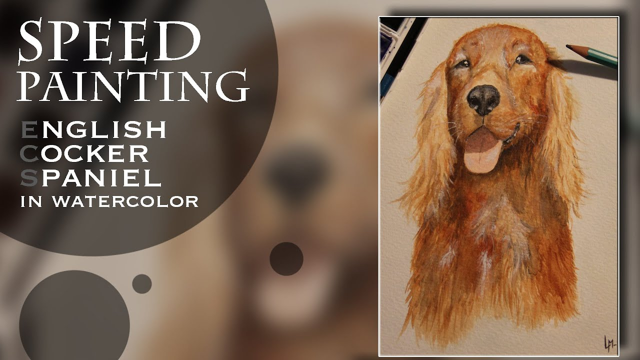 Speed Painting English Cocker Spaniel  Watercolor