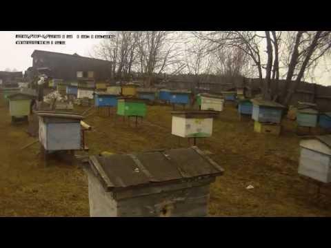 Роение - Пчеловодство для начинающих, мёд, пчела, воск