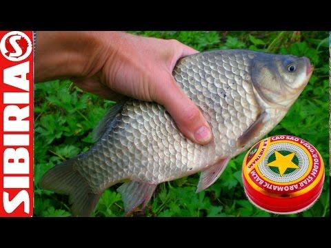 СЕКРЕТНАЯ насадка для РЫБАЛКИ Рецепт КЛЁВЫХ червей и опарышей для рыбалки с вьетнамской звёздочкой