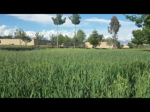 Let's Enjoy the Amazing Natural Beauty of Green land of kurram Agency Parachinar :By Enjoy the life