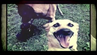 Селфи животных (Media Play Production)