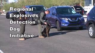 Training for bomb-sniffing dogs