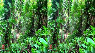 3D Video Tropical Plants - Hawaii Nature Scene - 3D Video Everyday N°218