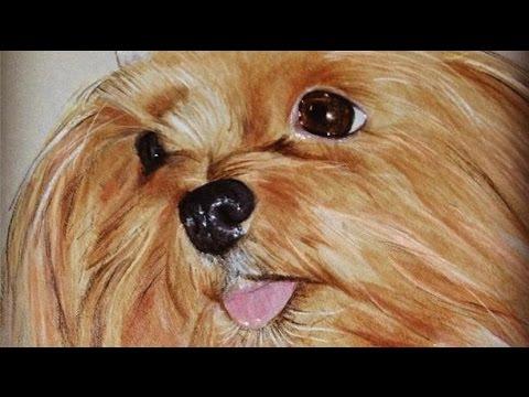 Dessin r aliste portrait de mon chien youtube - Dessin de chein ...