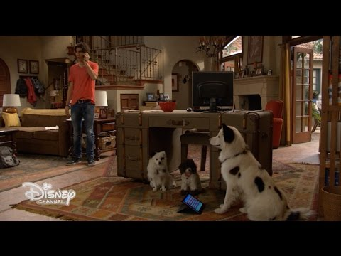 "Dog with a Blog - ""Tyler, sono Tyler dal futuro!"" - Dall"