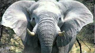 トラ・ゾウ保護基金(Japan Tiger and Elephant Fund, JTEF)は、アジアの...