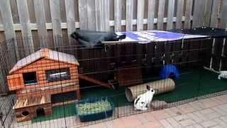 My Rabbits Clover And Daisy In Their Outside Enclosure