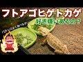 【爬虫類】フトアゴヒゲトカゲ飼育はじめました。#5