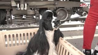 Отдельный вагон для перевозки животных появится в поездах