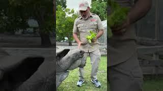 Giant tortoise high five 🖐🐢