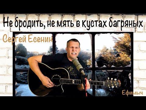 Ефимыч - Не бродить, не мять в кустах багряных... (С. Есенин)