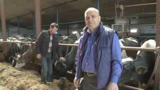Dlaczego krowy mają imiona?