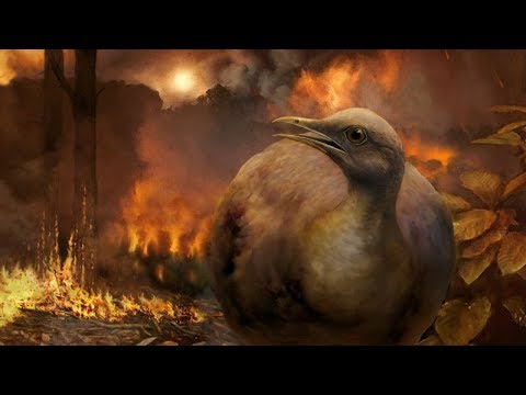 How did birds survive the asteroid hit that killed the dinosaurs?