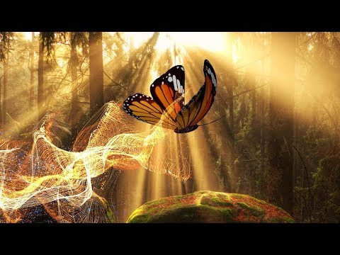 """Peaceful Music, Relaxing Music, Instrumental Music """"Into the Ancient Woods"""" by Tim Janis"""